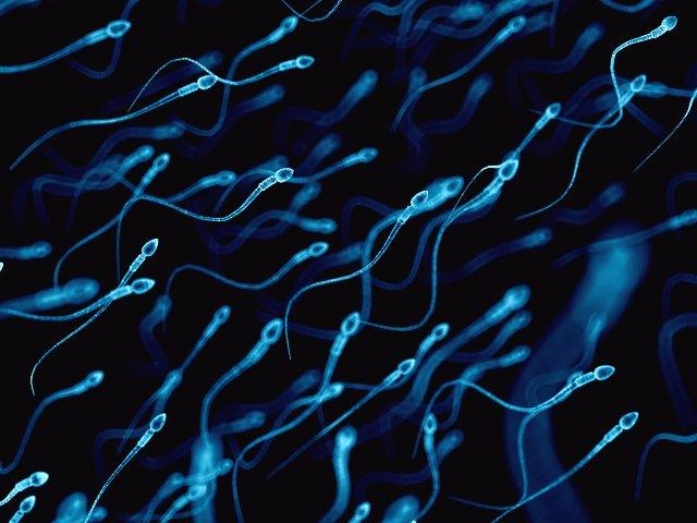 Исследователи используют сперму для доставки лекарств от рака в опухоли