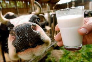 Способы определить температуру молока в разных условиях