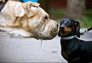 Взгляд в глаза не помогает переубедить собеседника