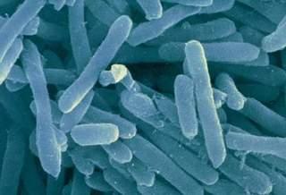 Микроб, которого никто даже не видел, может объяснить наше происхождение