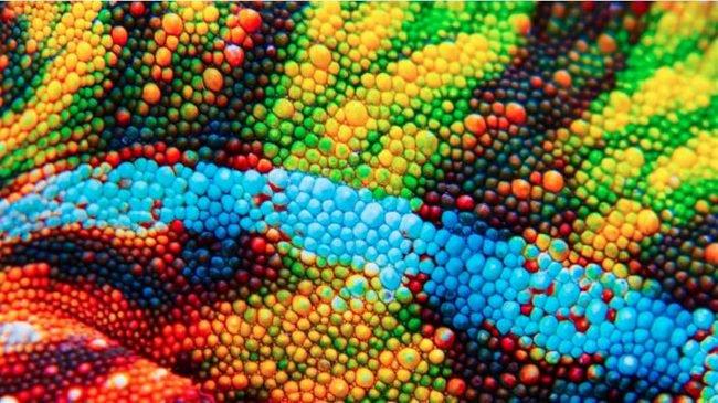 В Китае создали искусственную электронную «кожу», изменяющую цвет