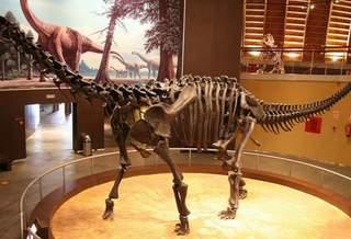 В ЮАР нашли останки одного из самых крупных динозавров Юрского периода